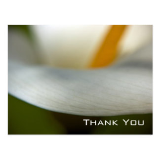 Calla Lily   Thank You Postcard