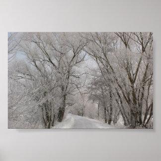 Calle alineada árbol del invierno póster