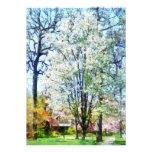 Calle con los árboles florecientes blancos comunicado personalizado