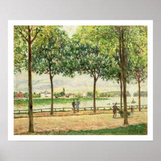 Calle de los árboles de castaña española por el rí póster