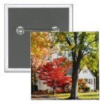 Calle del otoño con el árbol rojo pins