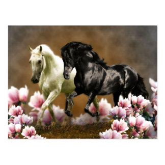 Callejón de la magnolia - postal