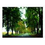 Callejón del árbol en Hungría Tarjeta Postal