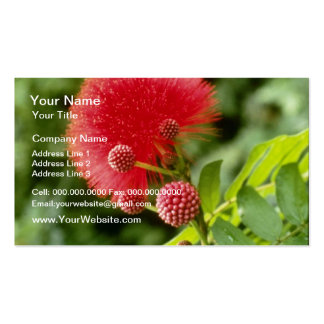 Calliandra Inaquilatera Powder Puff flowers Business Card Template