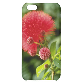 Calliandra Inaquilatera (Powder Puff) flowers Case For iPhone 5C