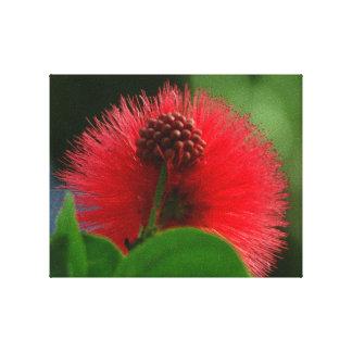 Calliandra rojo impresión en lona estirada