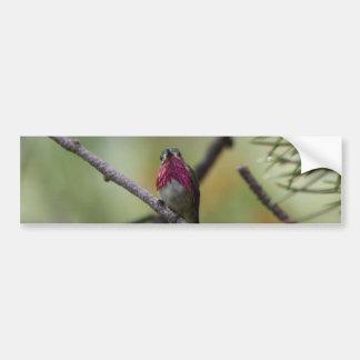 Calliope Hummingbird Bumper Sticker