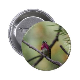 Calliope Hummingbird Button