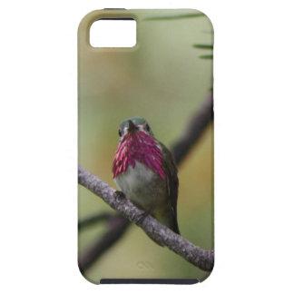 Calliope Hummingbird iPhone 5 Cases