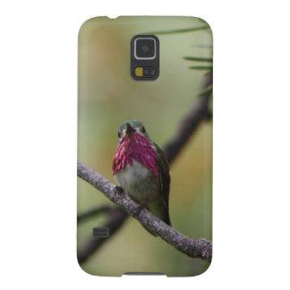 Calliope Hummingbird Galaxy Nexus Case