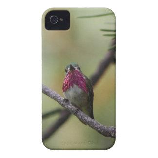 Calliope Hummingbird iPhone 4 Cases
