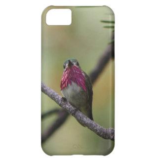 Calliope Hummingbird iPhone 5C Cover