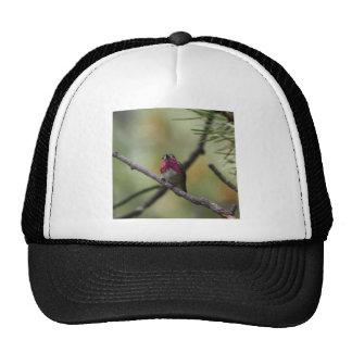 Calliope Hummingbird Hats
