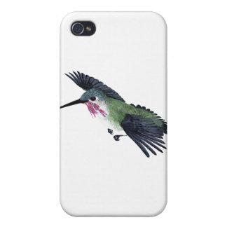 Calliope Hummingbird iPhone 4/4S Cover