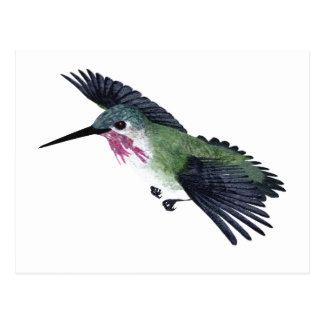 Calliope Hummingbird Postcard
