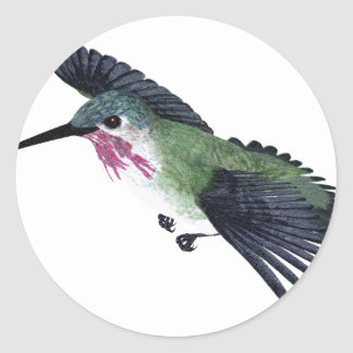 Calliope Hummingbird Stickers