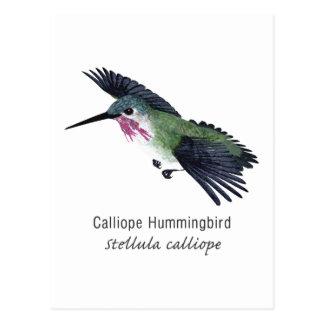 Calliope Hummingbird with Name Postcard