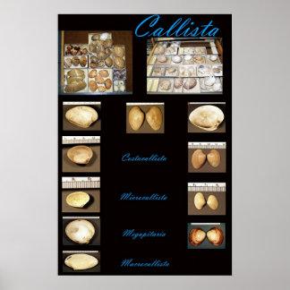 Callista Posters