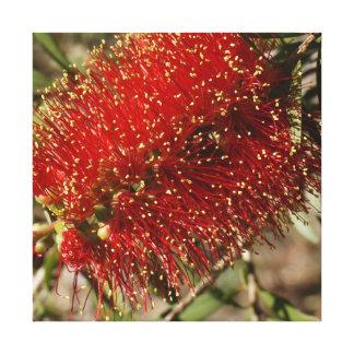 CALLISTEMON RED BOTTLE BRUSH RURAL AUSTRALIA GALLERY WRAPPED CANVAS