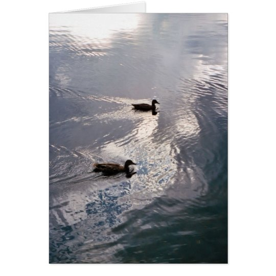 Calm Ducks Before the Storm Card