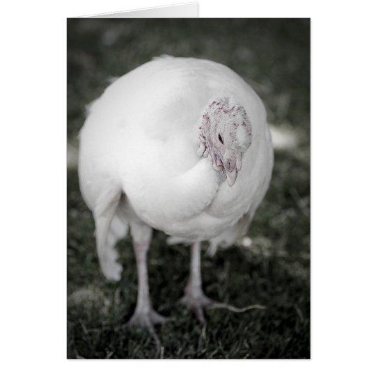 Calm Turkey Card