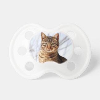 calma de la paz del amor del gato de tabby chupetes