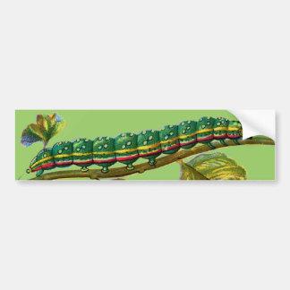 Calocampa vetusta caterpillar bumper sticker