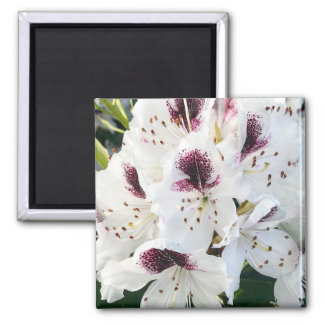 Calsap Rhododendrons Magnet