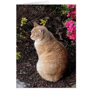 Calvin in the Garden Greeting Card