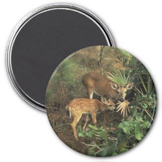 Calvium del virginian de los ciervos/de Odocolileu Imán Redondo 7 Cm