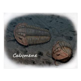 Calymene Trilobite Tarjetas Postales