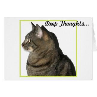 Calypso Cat Profile Card