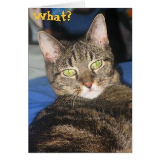 Calypso Kitty Sass Card