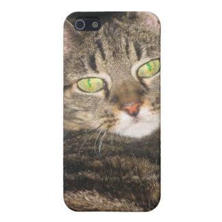 Calypso Kitty Sass Case