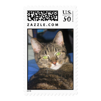 Calypso Kitty Sass Stamp
