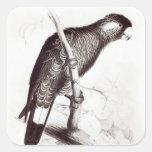 Calyptorhynchus Baudinii, or Baudin's Cockatoo Stickers