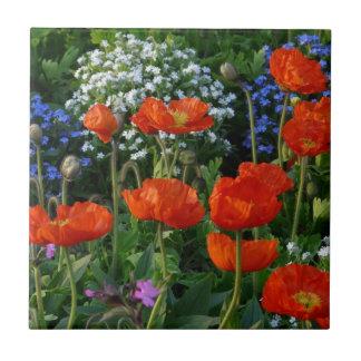 Cama de flor colorida con las amapolas rojas