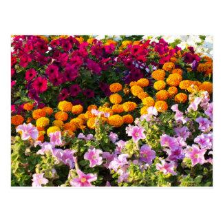 Cama de flor colorida postales