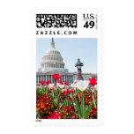 Cama de flor en la primavera en Washington, C.C. Envio