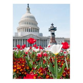 Cama de flor en la primavera en Washington, C.C. Tarjetas Postales