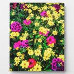 Cama de flor vibrante placas para mostrar