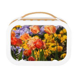 cama de tulipán