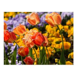 cama de tulipán postal