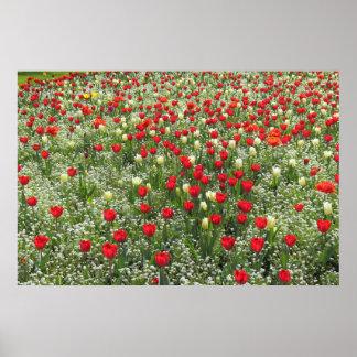 Cama de tulipanes póster