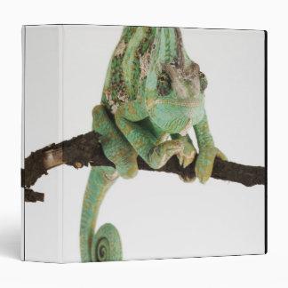 """Camaleón audazmente coloreado con característica carpeta 1 1/2"""""""
