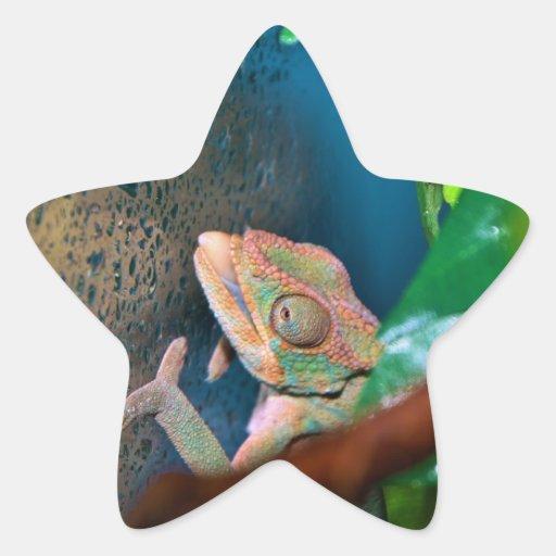 Camaleón colorido en una pared de cristal calcomania forma de estrella