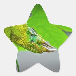 Camaleón de cuernos del gigante 3 pegatinas forma de estrellaes