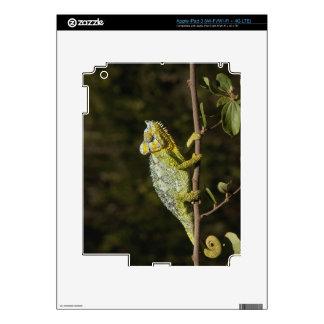 camaleón del Aleta-cuello iPad 3 Pegatinas Skins