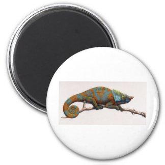 Camaleón en la presa imán redondo 5 cm