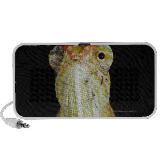 Camaleón Jewelled, o el camaleón de Campan iPod Altavoces